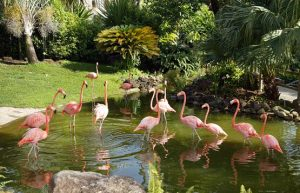 Flamingo's pool